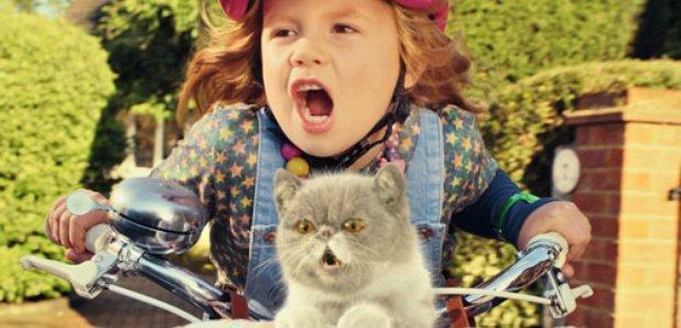 three, sing it kitty